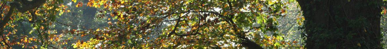 cropped-DSC_0032.jpg