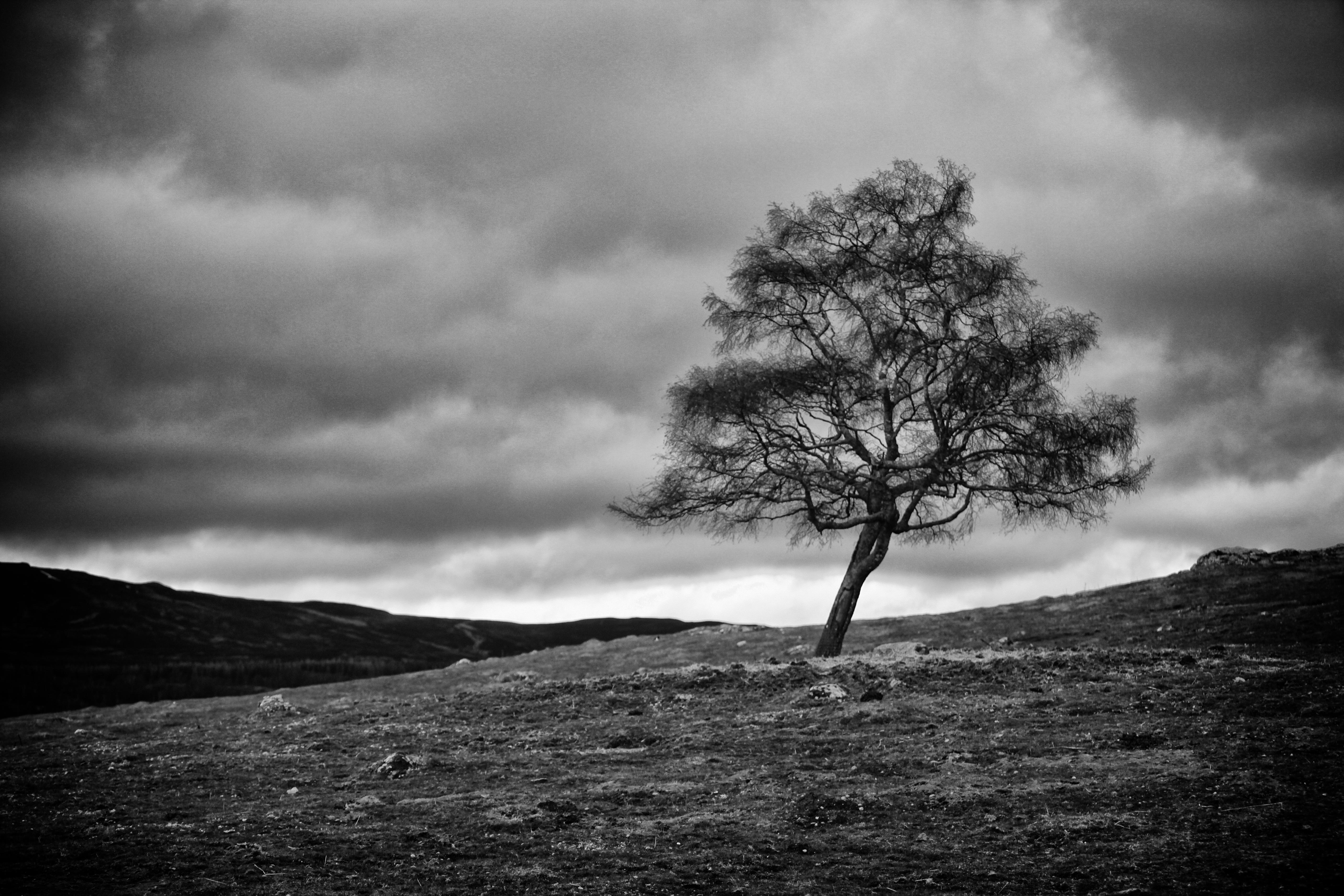 lone_tree_bw